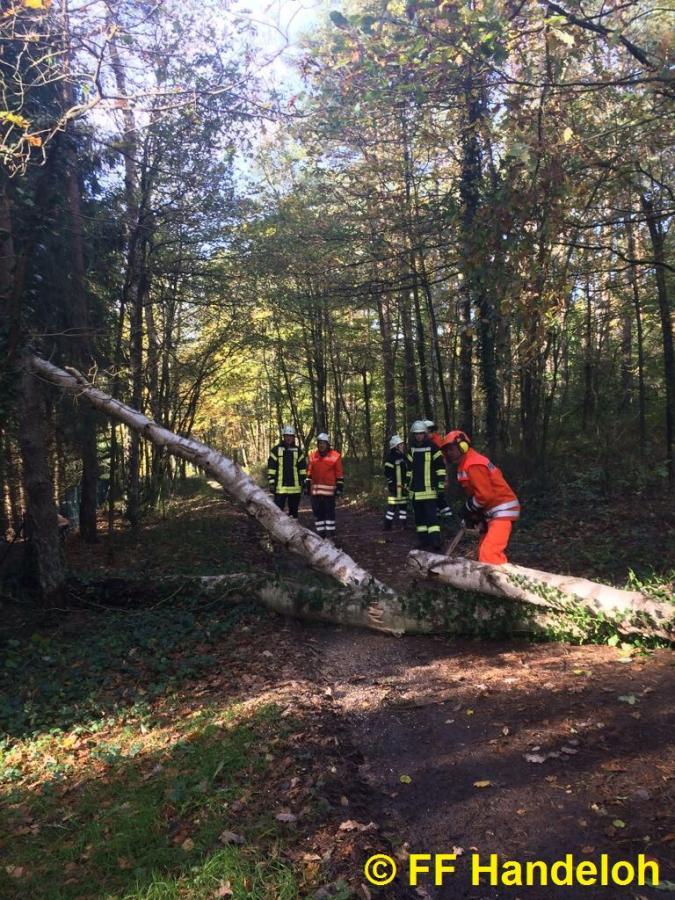 TH1 - Baum droht zu fallen