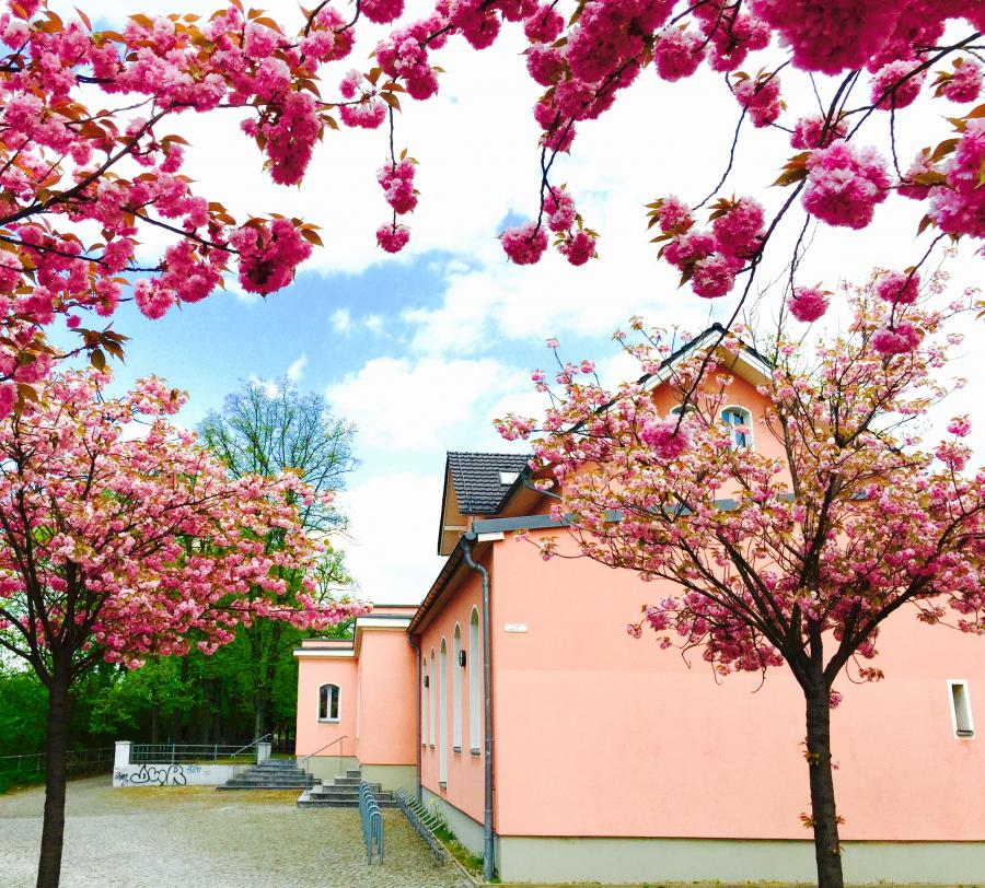 Die Bibliothek in der farbenfrohen Blütezeit