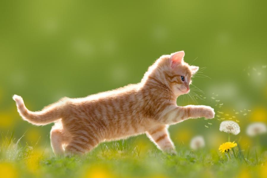 gesundes Katzenfutter nass