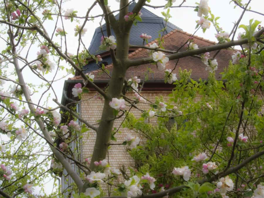 Friedhelm Eyert April Kirchenblüte April