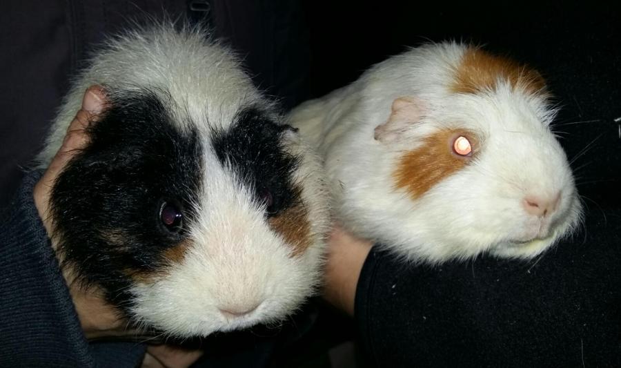 Friedrich und Frieda