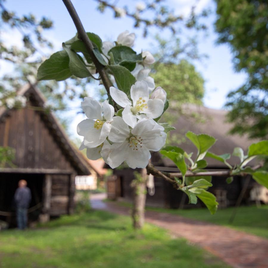 Obstbaum Freilandmuseum Lehde Foto- Museum OSL