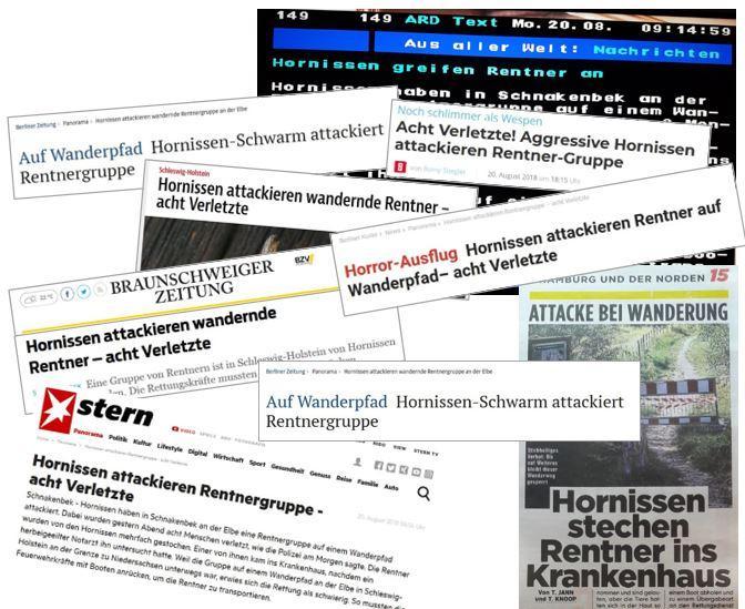 2018-08-19 Hornissen