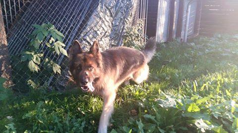 Fundhund Fritz