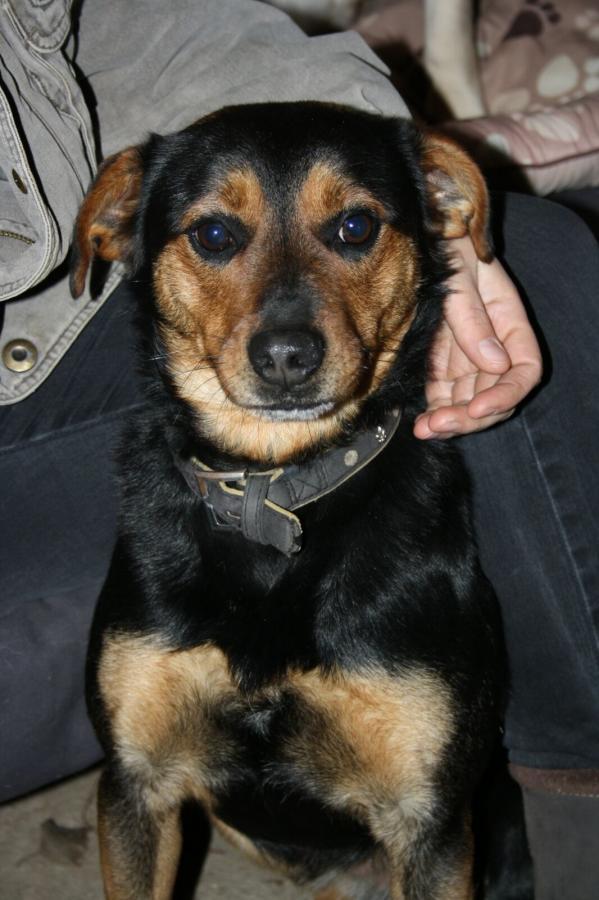 Fundhund Timmy