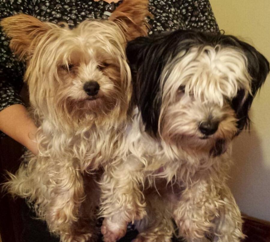 Fundhund Lizzy und Charly
