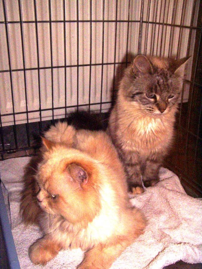 Foto 1 Fundkatzen