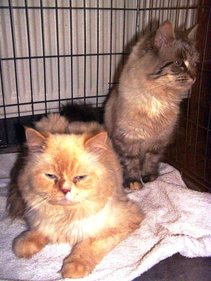 Foto 2 Fundkatzen