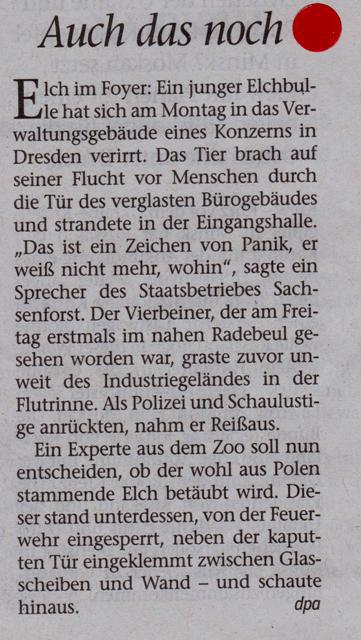 FW 2014.08.26 Verirrter Elch
