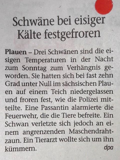 FW 2017.01.09 Festgefrorene Schwäne
