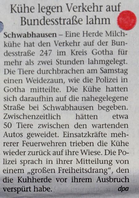 FW 2017.09.04 Kühe legen Verkehr lahm