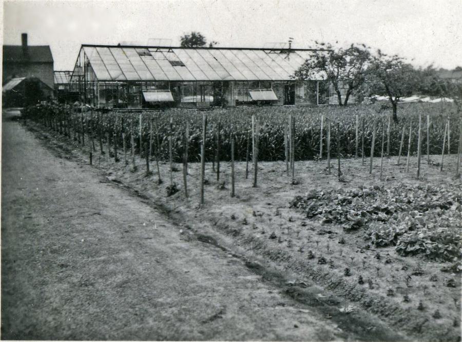 Gärtnerei 30-40 iger Jahre