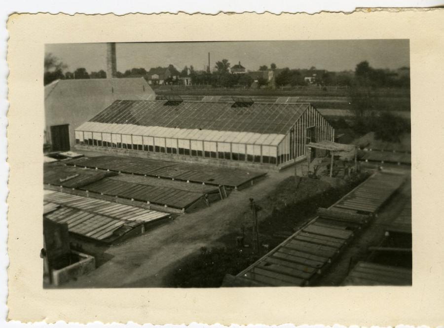 Gärtnerei 50iger Jahre