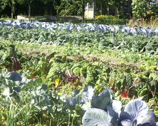 Gartenbau Rusch