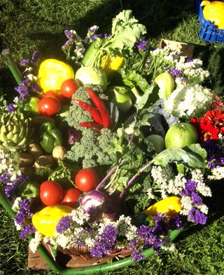 unser Angebot Gartenbau Rusch