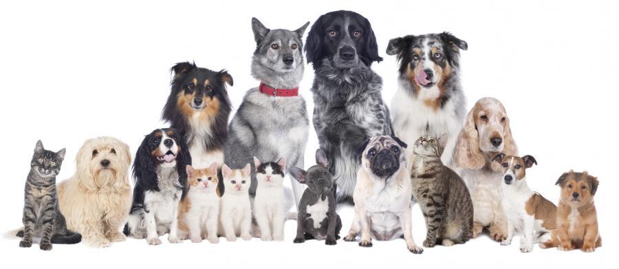 Gesundes Hundefutter & Katzenfutter
