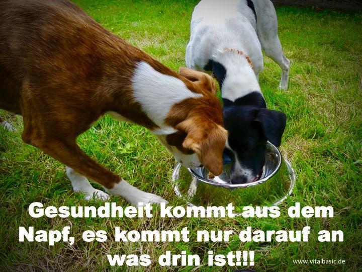 Gesunde Tiernahrung für Hunde & Katzen