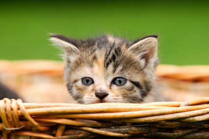 Natürliches Katzenstreu von Xantara, aus Pinienholz für die Katzentoilette