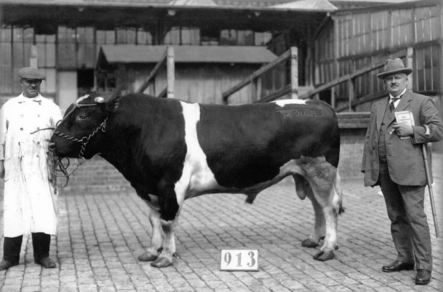 Gustav Glasow auf dem Viehmarkt in Berlin in den 1920ger Jahren