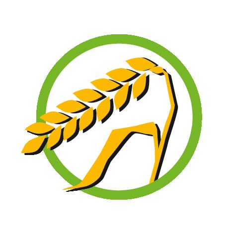 Glutenhaltiges Getreide