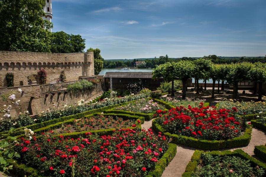 Rosengärten an der Burg, Eltville a. Rh.(c) Stadt Eltville