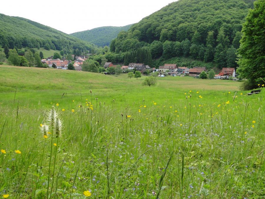 Grünland - offengehalten durch Beweidung in Lonau