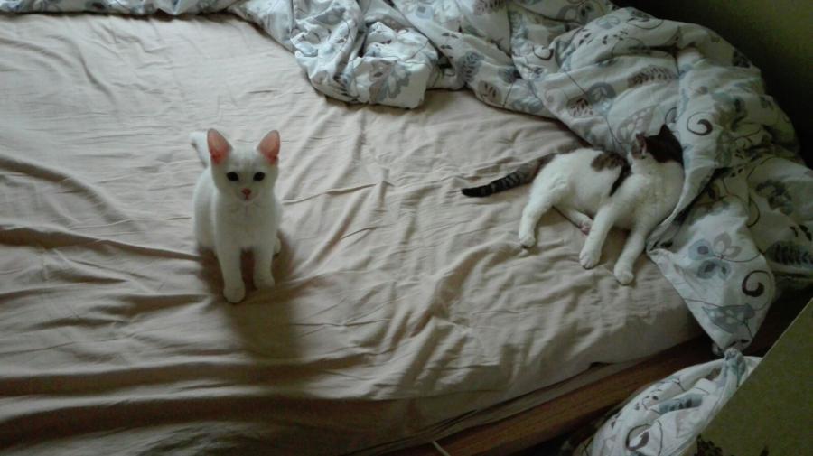Gustav und Mücke