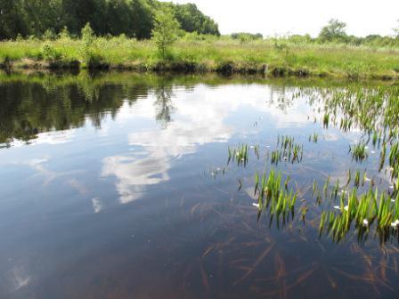 Hechtmoor großer Teich nahe Osterbunsbüll.JPG