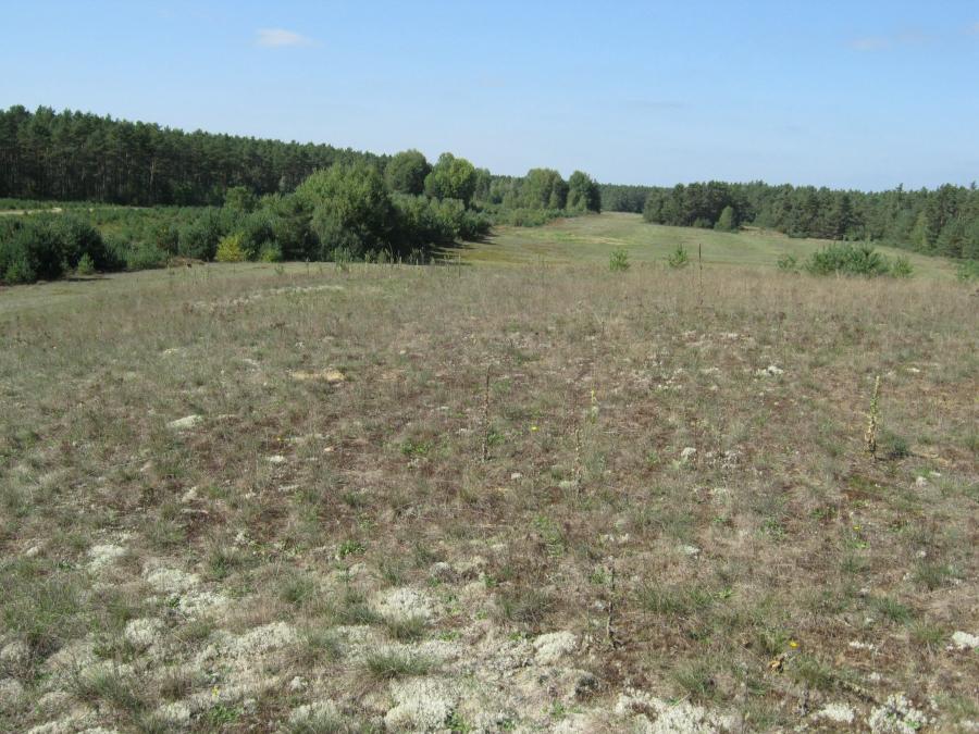 Wald- und Heidelanschaft östlich von Bodenwöhr, Quelle: Markus Kurz