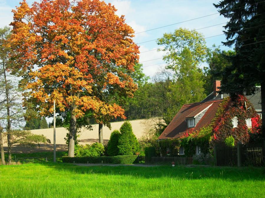 Herbst hinterm Hohberg
