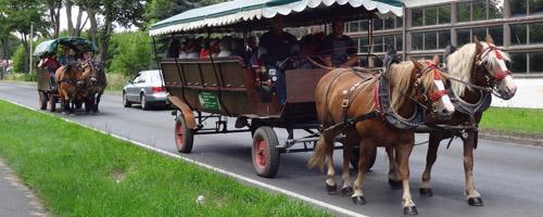 Wandern_Pferde