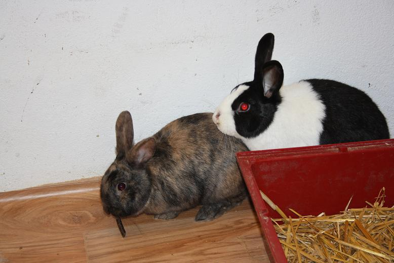 Hopper und Bibi