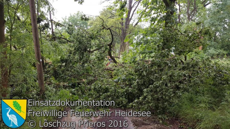 Einsatz 46/2016 | Baum auf Straße und in Telefonleitung | Streganz Münchehofer Straße 24.05.2016