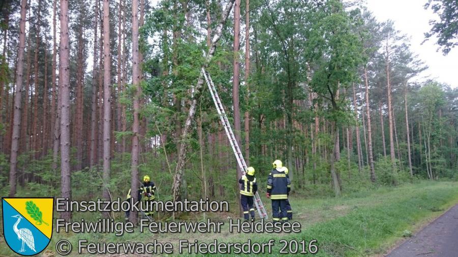 Einsatz 52/2016 | Baum droht auf Straße zu stürzen | L40 OV Friedersdorf - Bindow 24.05.2016