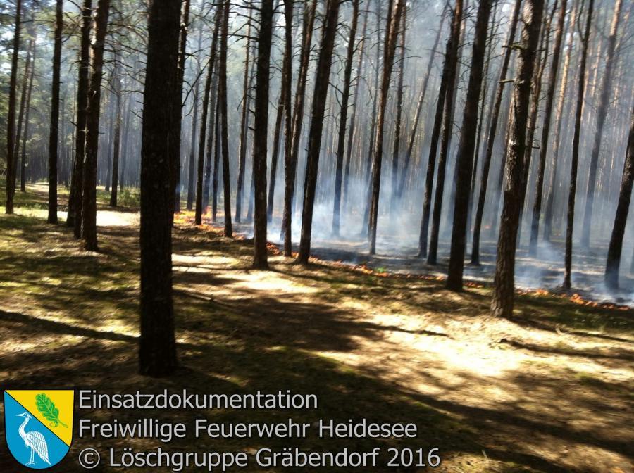 Einsatz 60/2016 | 1000m² Waldbodenbrand | Gräbendorf Am Dolgenhorst 06.06.2016