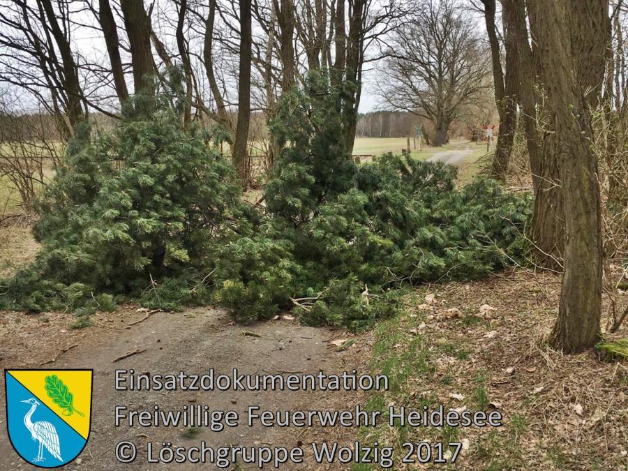 Einsatz 20/2017 | Baumkrone auf Fahrbahn | Wolzig Spreenhagener Straße 19.03.2017