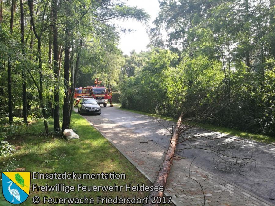 Einsatz 105/2017 | Baum auf Straße | Blossin Waldweg | 27.07.2017