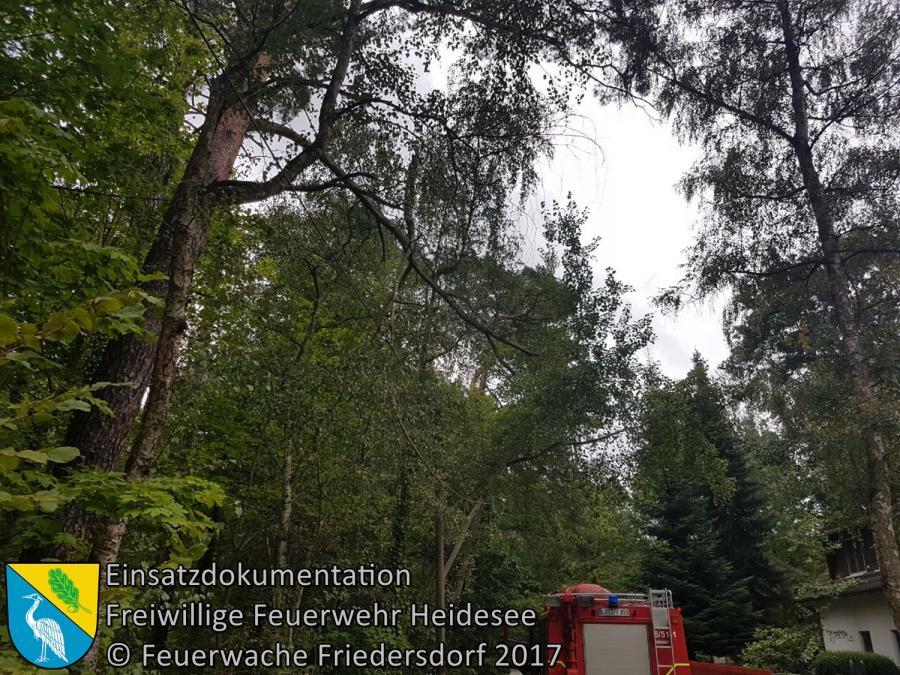 Einsatz 118/2017 | Ast in Telefonleitung | Bindow Südkorso | 14.09.2017