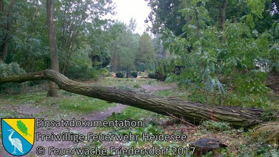 Einsatz 277/2017 | Baum auf Straße | Wolzig Alter Postweg | 06.10.2017