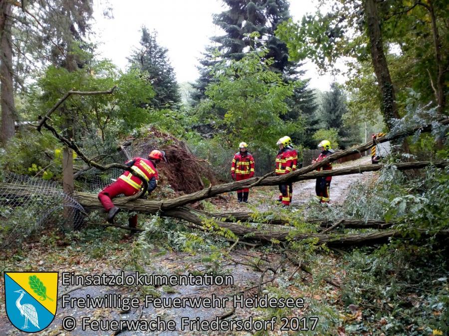 Einsatz 271/2017 | mehrere Bäume auf Straße | Dolgenbrodt Anglerweg | 06.10.2017