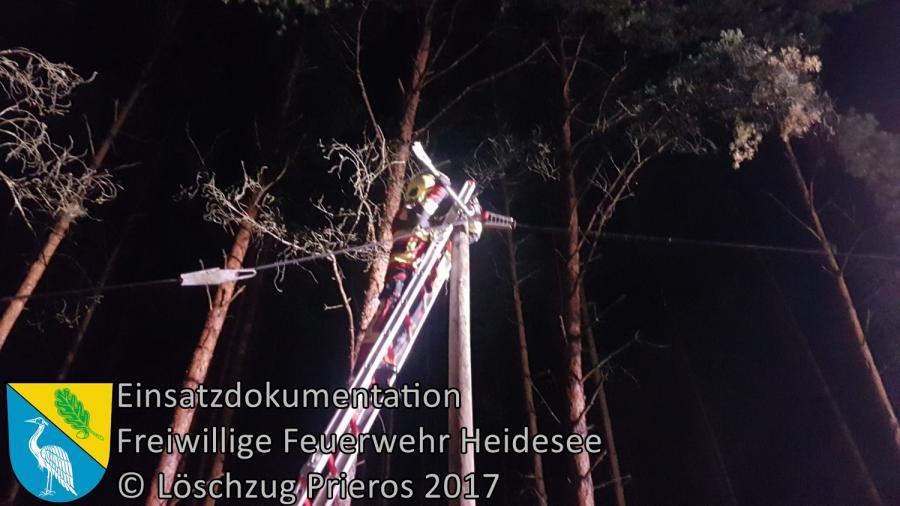 Einsatz 264/2017 | Baum in Telefonleitung | Prieros Ziestsee | 06.10.2017