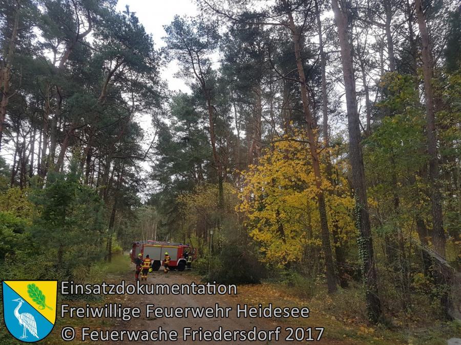 Einsatz 315/2017 | Baumkrone abgebrochen | Bindow Mariannenstraße | 29.10.2017