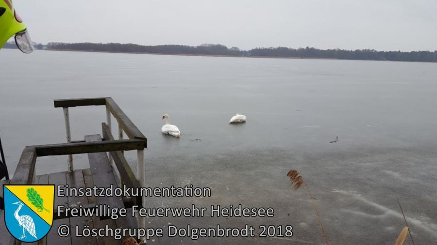 Einsatz 16/2018 | Schwan in Angelsehne verfangen | Dolgenbrodt Am Seekorso | 08.03.2018