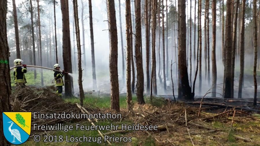 Einsatz 41/2018 | 1000m² Waldbodenbrand | Münchehofe Ri. Schwerin (LOS) | 09.05.2018