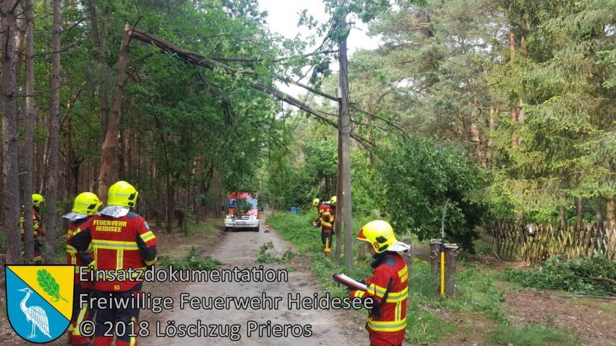 Einsatz 45/2018 | Baum in Telefonleitung | Prieros Ziestsee | 17.05.2018