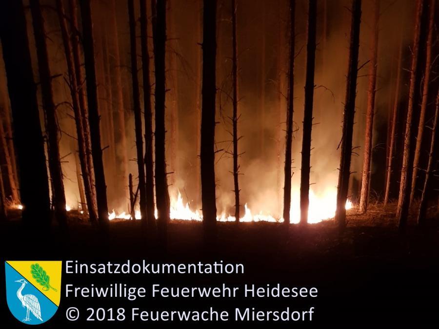 Einsatz 119/2018 | 350 ha Waldbrand | Treuenbrietzen (PM) | 24.08.2018