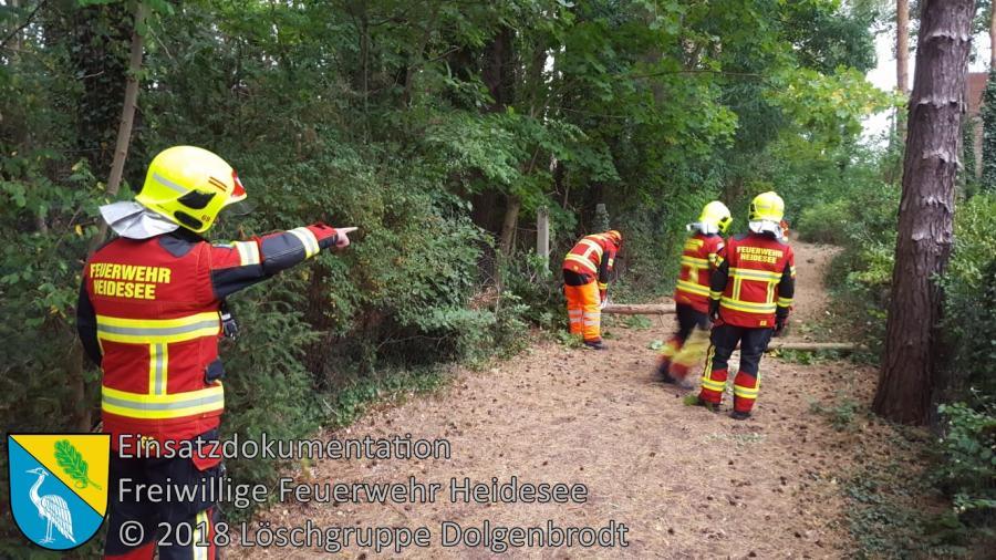 Einsatz 132/2018 | Baum über Weg | Dolgenbrodt Am Langen See | 21.09.2018