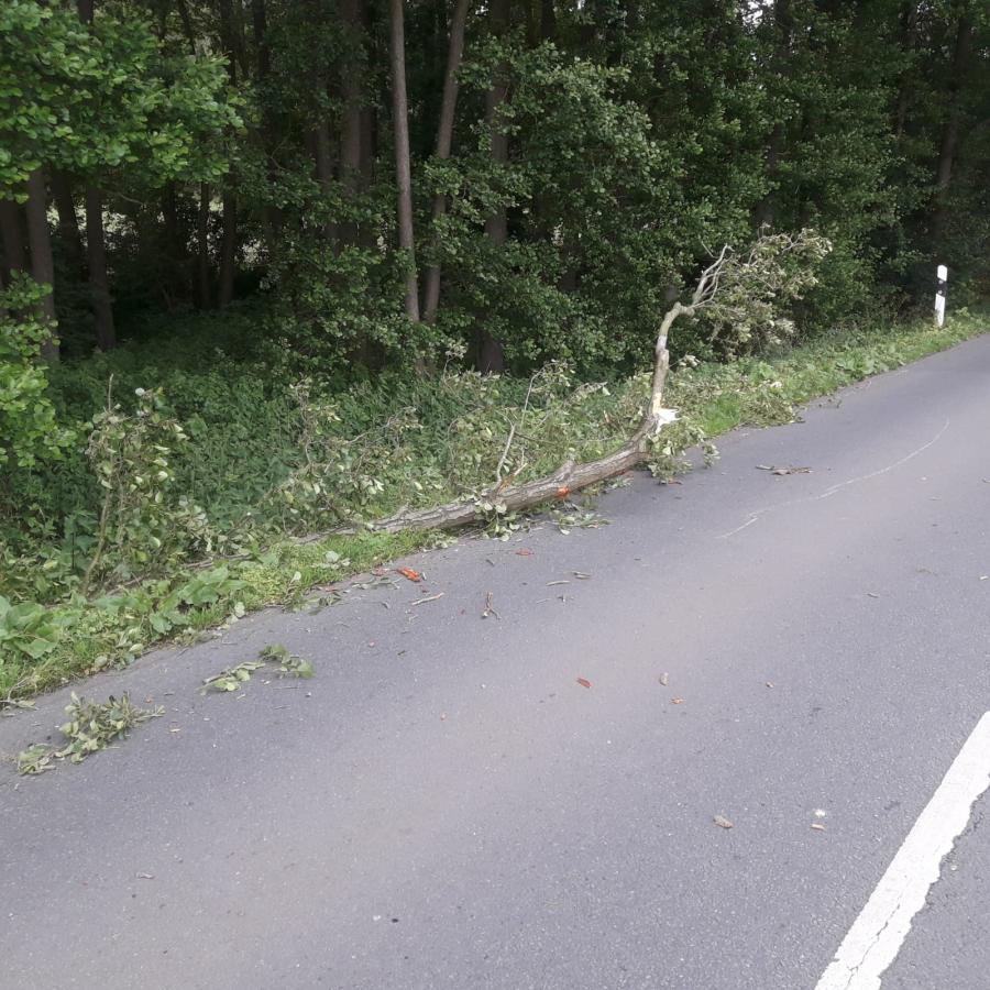 Baum auf Straße am 08.06.19