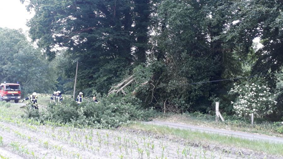 Baum auf Straße in Dalum