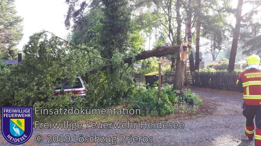 Einsatz 61/2019 | Baum auf PKW | Streganz Waldcorso | 11.06.2019